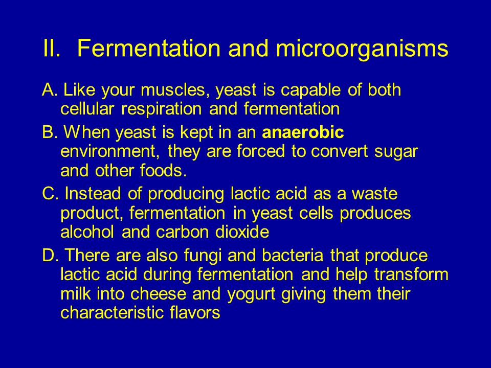 II. Fermentation and microorganisms A. Like your muscles, yeast is capable of both cellular respiration and fermentation B. When yeast is kept in an a