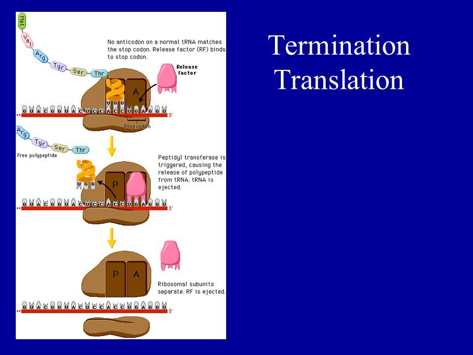 Termination Translation