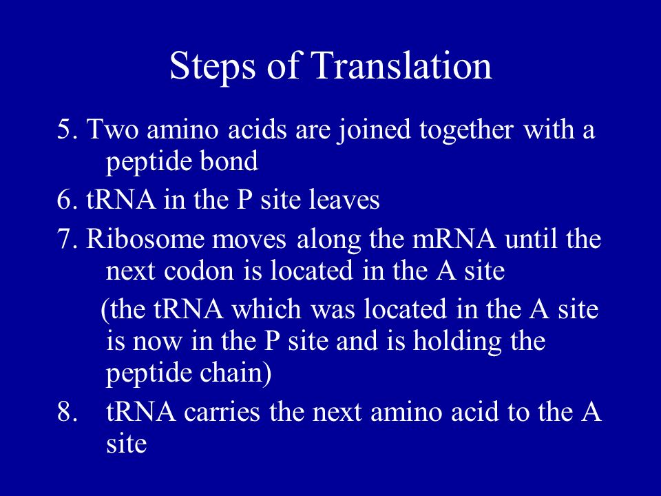 Steps of Translation 5. Two amino acids are joined together with a peptide bond 6. tRNA in the P site leaves 7. Ribosome moves along the mRNA until th