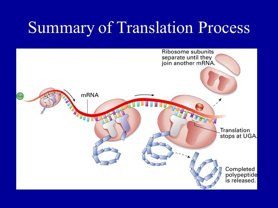 Summary of Translation Process