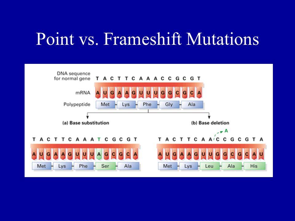 Point vs. Frameshift Mutations