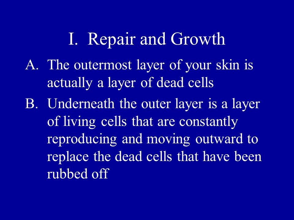 I. Repair and Growth A.The outermost layer of your skin is actually a layer of dead cells B.Underneath the outer layer is a layer of living cells that
