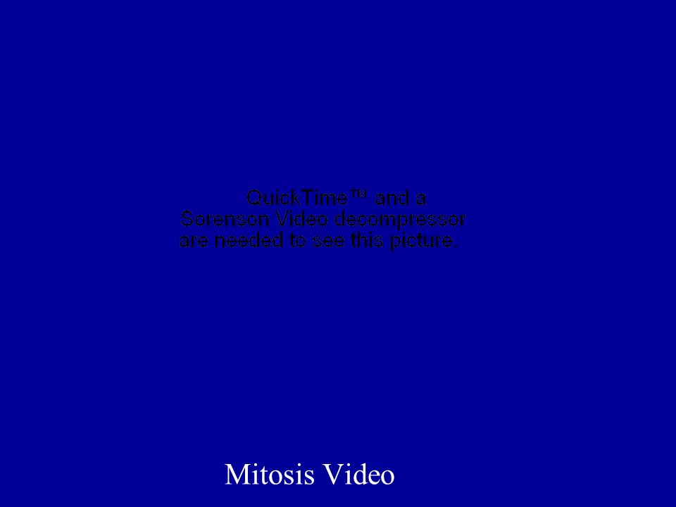 Mitosis Video