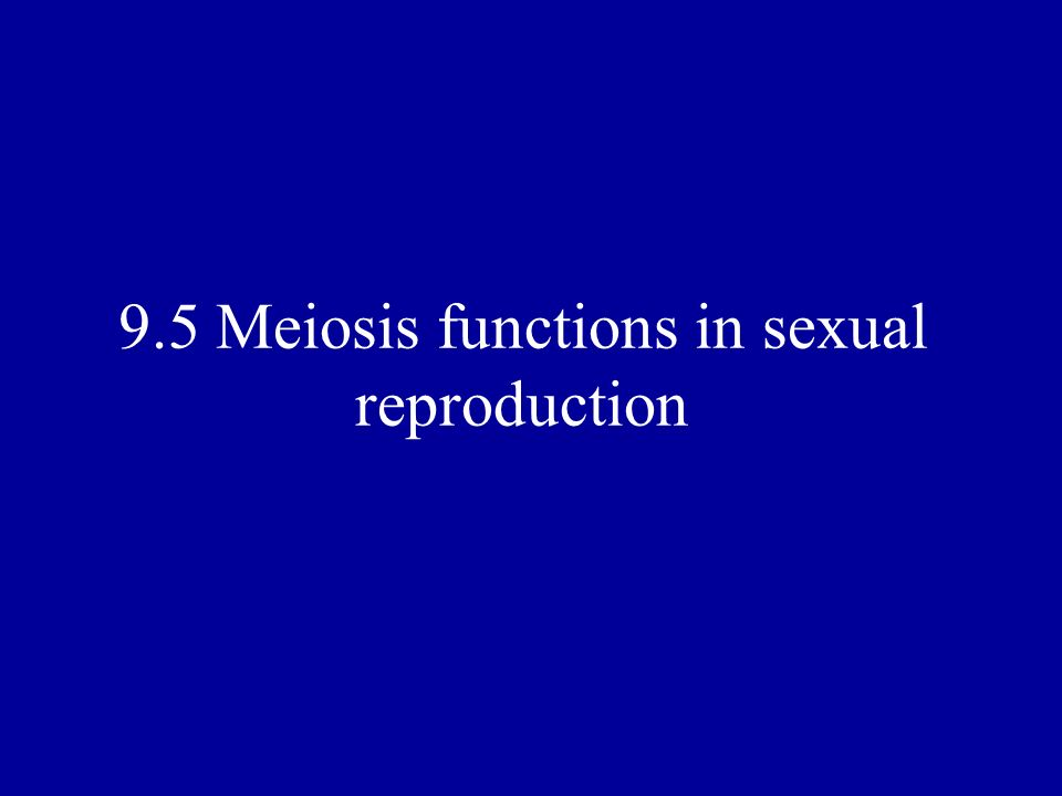 9.5 Meiosis functions in sexual reproduction