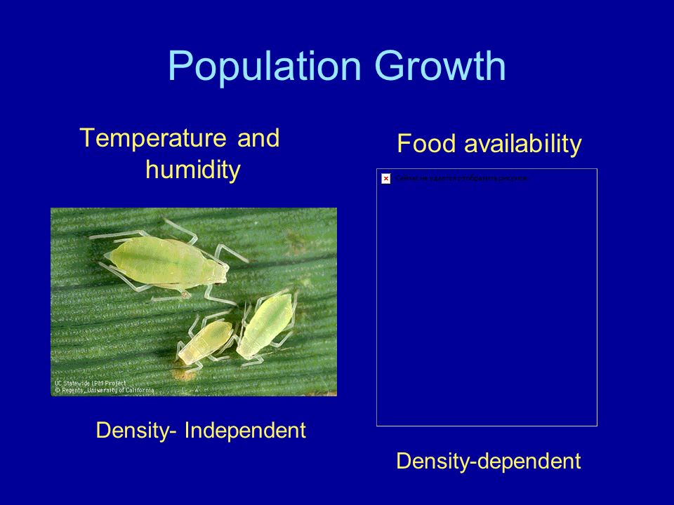 Population Growth Food availability Temperature and humidity Density- Independent Density-dependent
