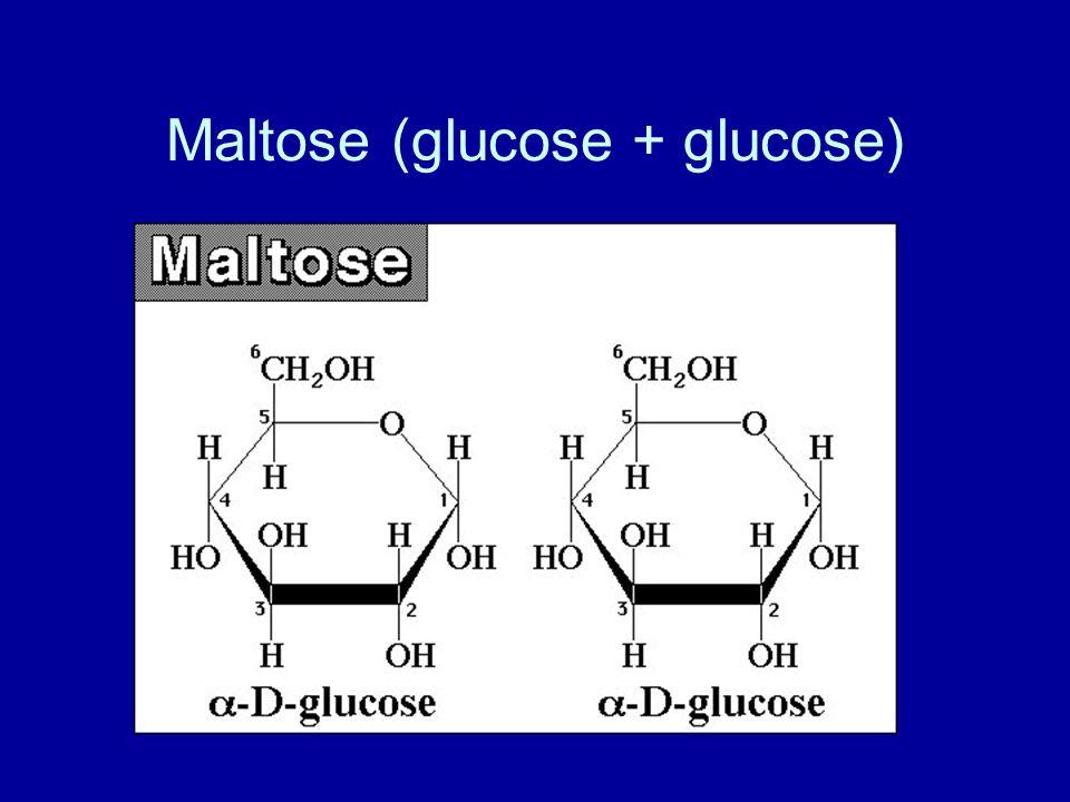 Maltose (glucose + glucose)