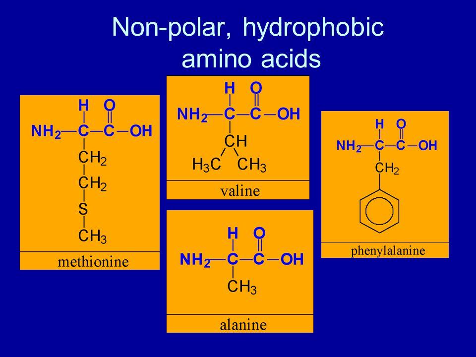 Non-polar, hydrophobic amino acids