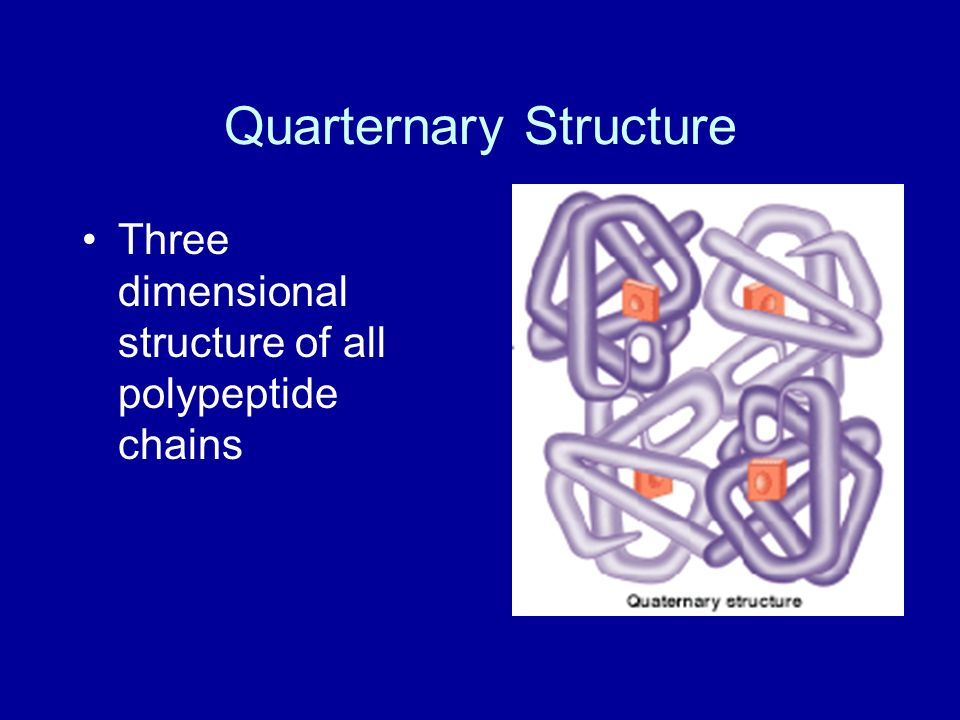 Quarternary Structure Three dimensional structure of all polypeptide chains