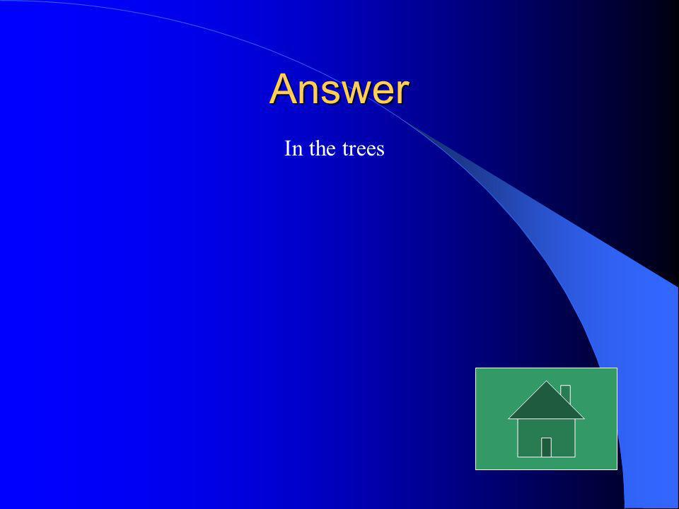 Answer In the trees