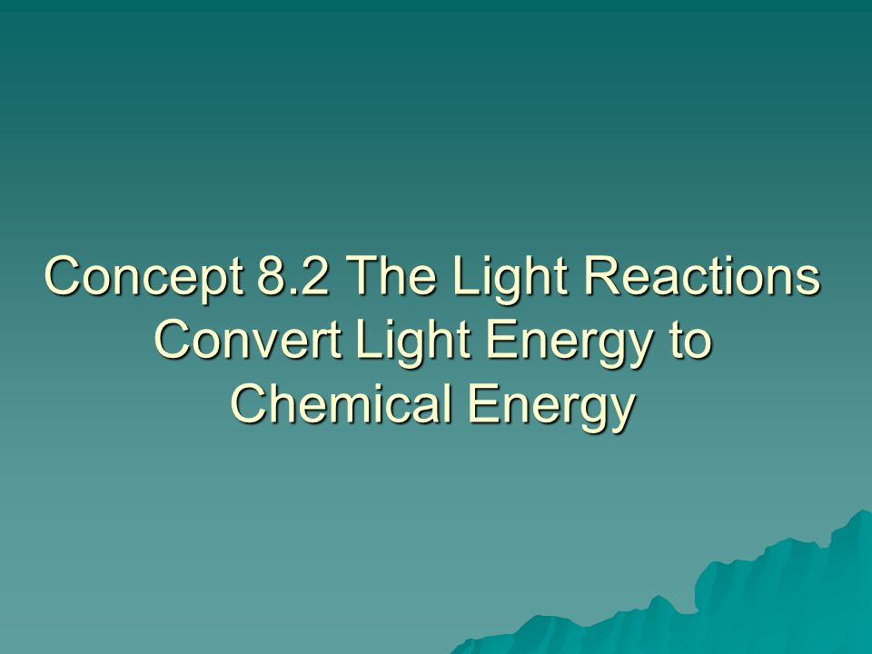 Concept 8.2 The Light Reactions Convert Light Energy to Chemical Energy