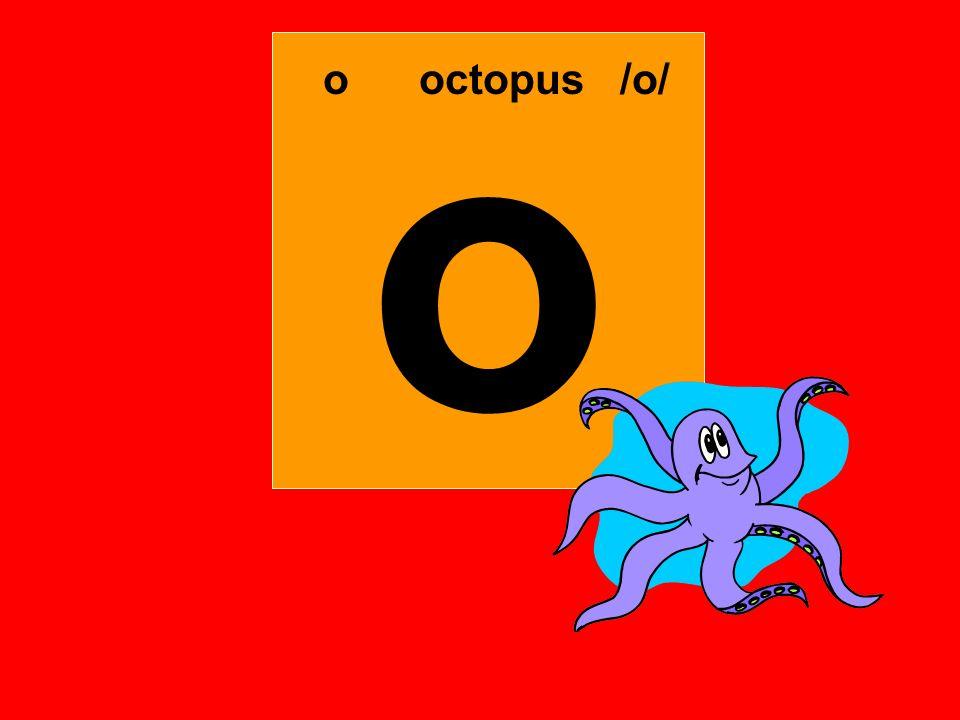 o ooctopus /o/