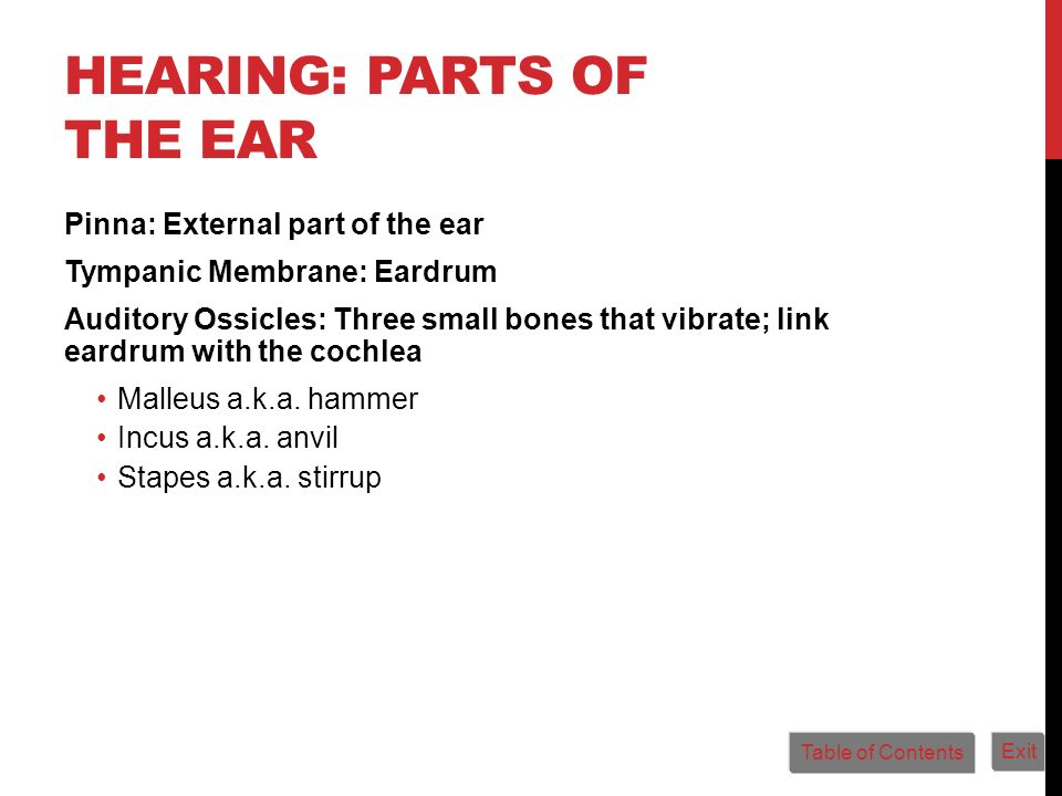 HEARING: PARTS OF THE EAR Pinna: External part of the ear Tympanic Membrane: Eardrum Auditory Ossicles: Three small bones that vibrate; link eardrum w