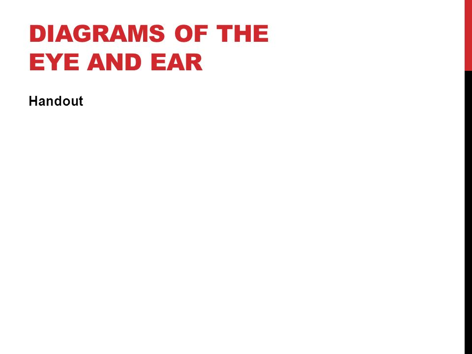 DIAGRAMS OF THE EYE AND EAR Handout