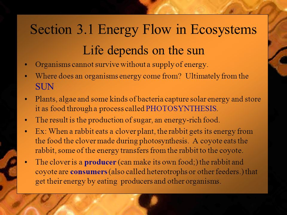 Section 3.1 Energy Flow in Ecosystems Life depends on the sun Organisms cannot survive without a supply of energy. Where does an organisms energy come