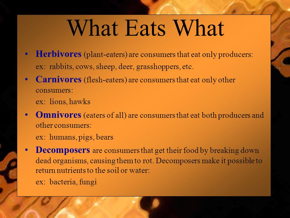 What Eats What Herbivores (plant-eaters) are consumers that eat only producers: ex: rabbits, cows, sheep, deer, grasshoppers, etc. Carnivores (flesh-e