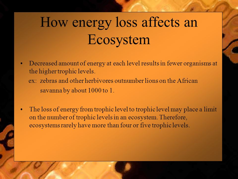 How energy loss affects an Ecosystem Decreased amount of energy at each level results in fewer organisms at the higher trophic levels. ex: zebras and