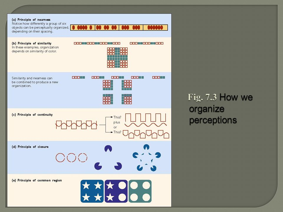 Fig. 7.3 How we organize perceptions