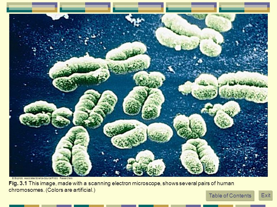 Fig. 3.1 This image, made with a scanning electron microscope, shows several pairs of human chromosomes. (Colors are artificial.) © Biophoto Associate