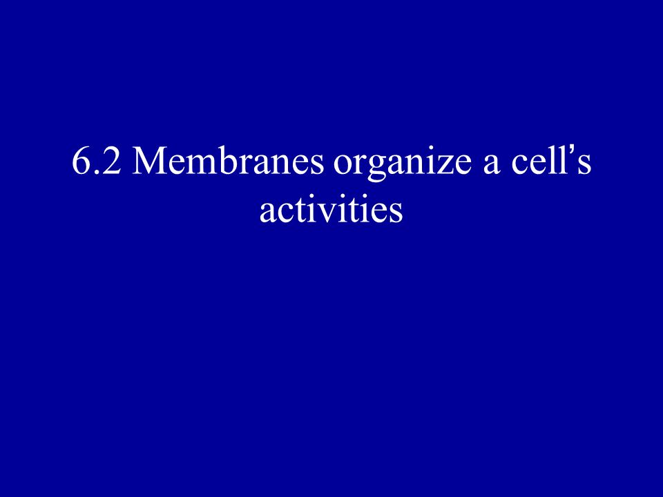 6.2 Membranes organize a cell s activities