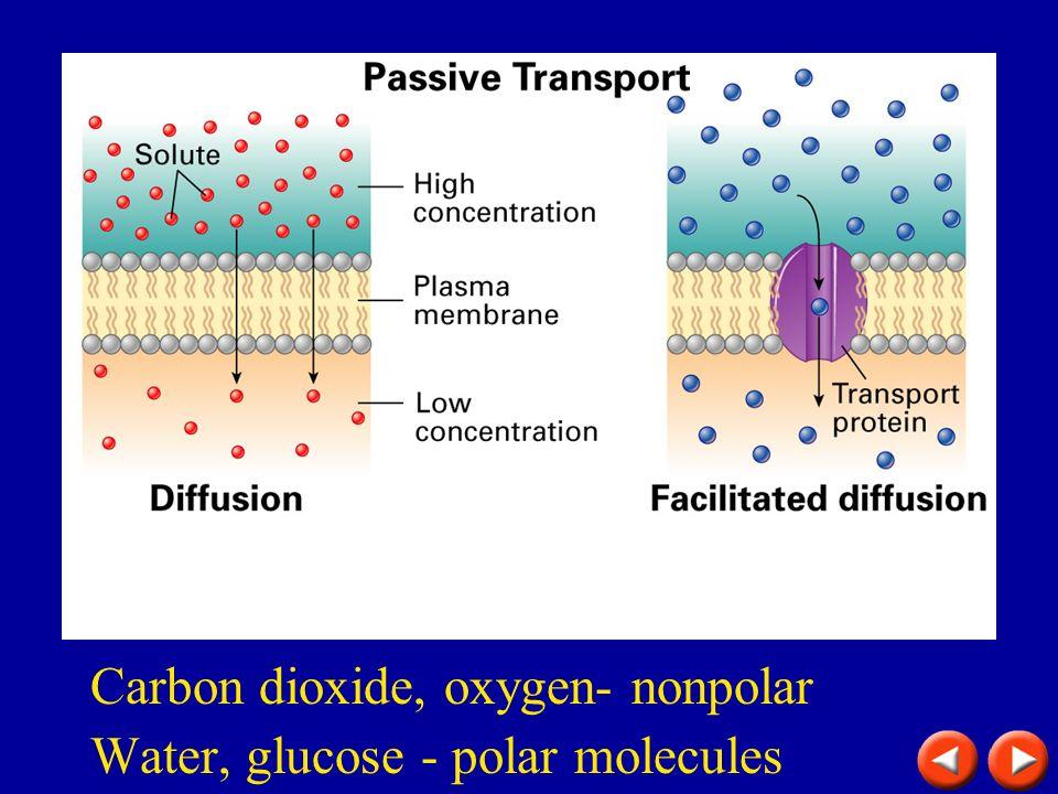 Passive transport Carbon dioxide, oxygen- nonpolar Water, glucose - polar molecules
