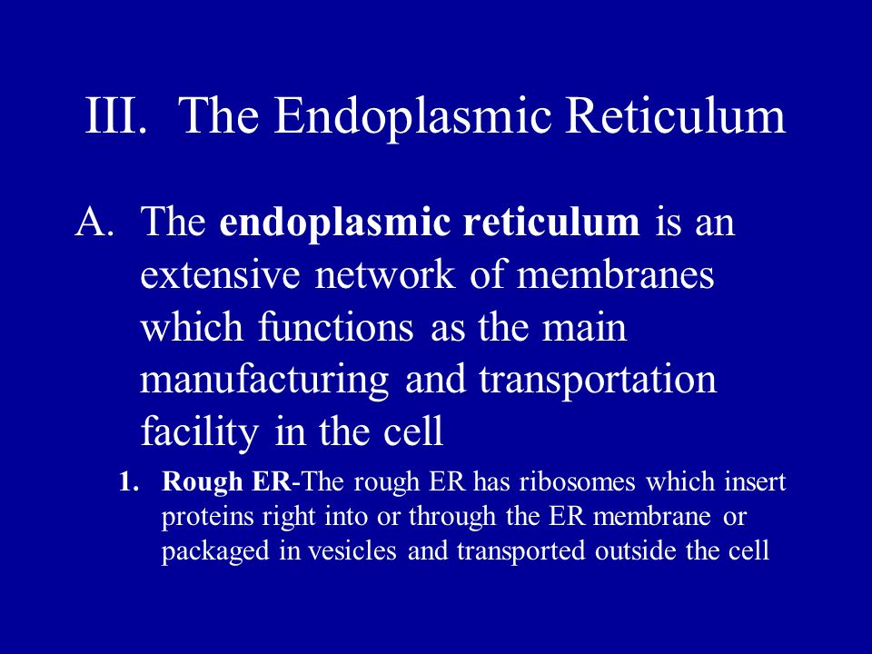 Endoplasmic Reticulum 2.Smooth ER-The smooth ER lacks ribosomes but enzymes in the smooth ER allow it to make lipid molecules