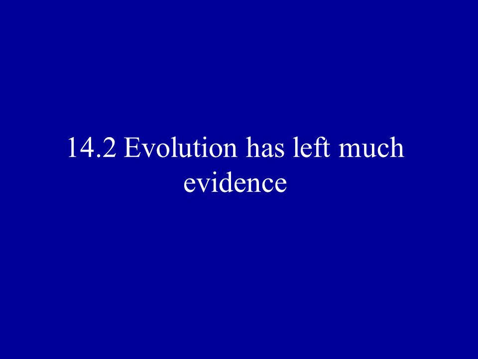 14.2 Evolution has left much evidence