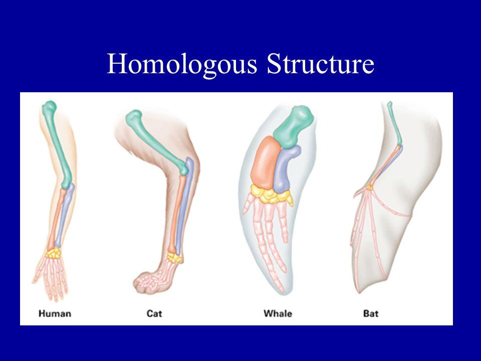 Homologous Structure