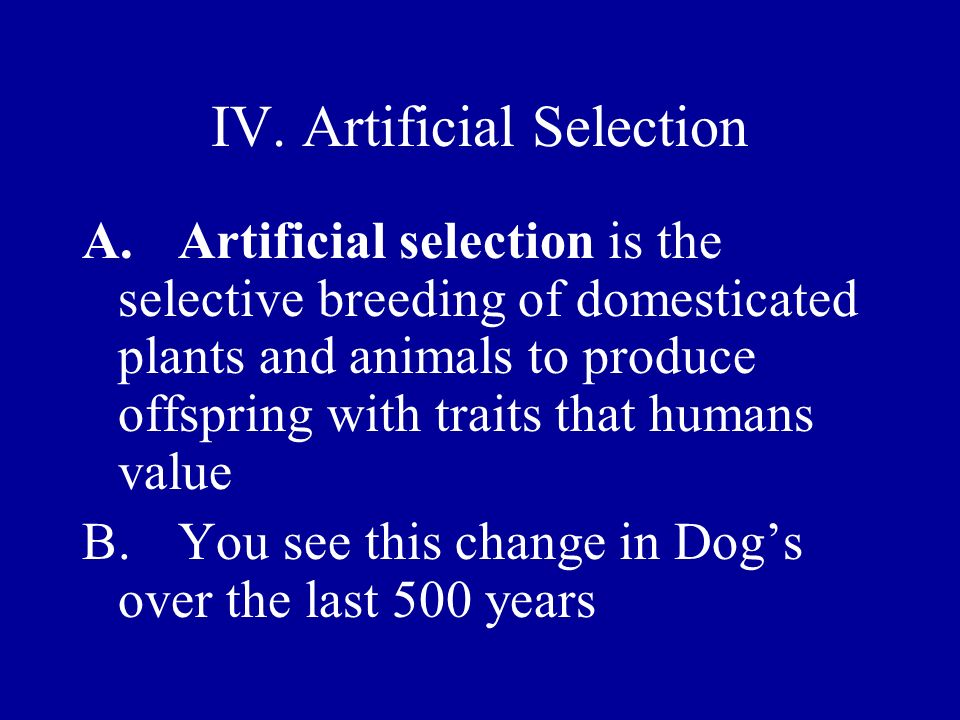 IV. Artificial Selection A.Artificial selection is the selective breeding of domesticated plants and animals to produce offspring with traits that hum