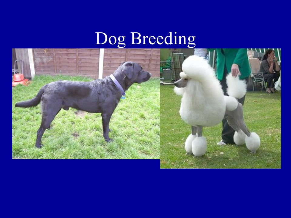 Dog Breeding