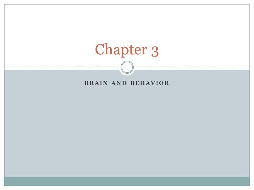 BRAIN AND BEHAVIOR Chapter 3