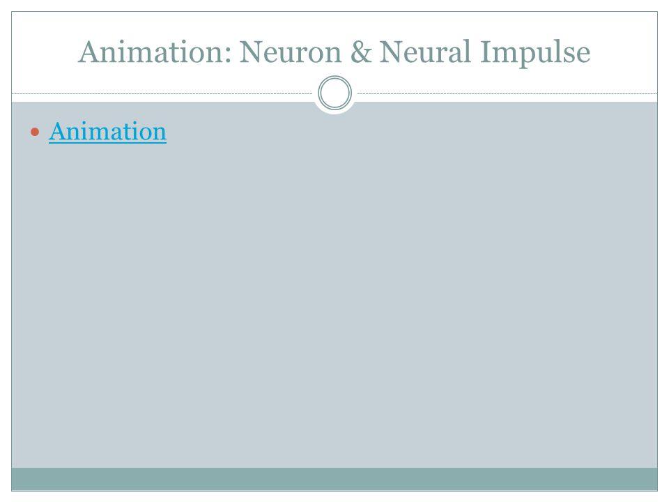 Animation: Neuron & Neural Impulse Animation