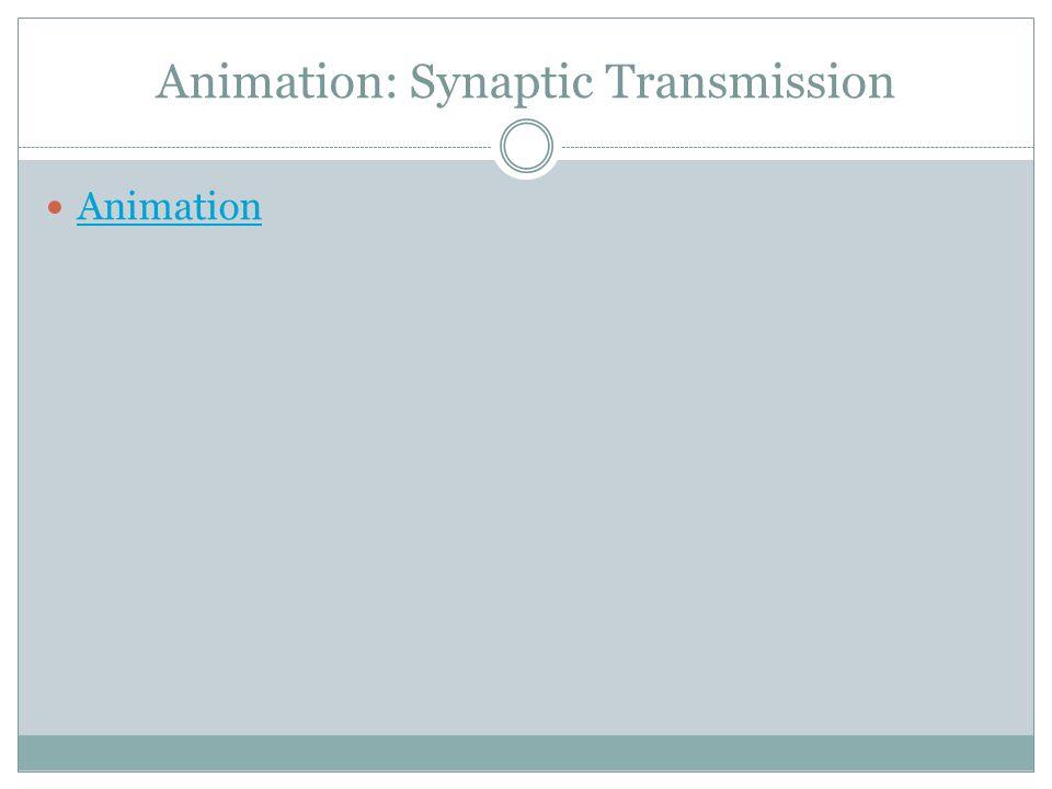 Animation: Synaptic Transmission Animation