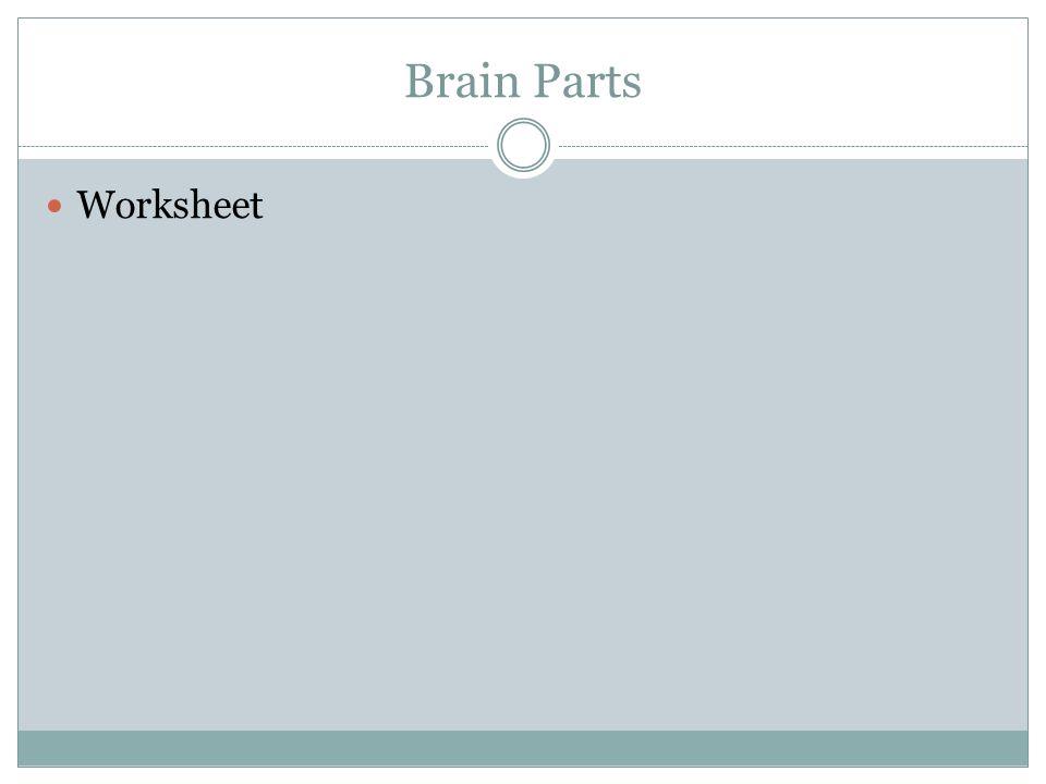 Brain Parts Worksheet