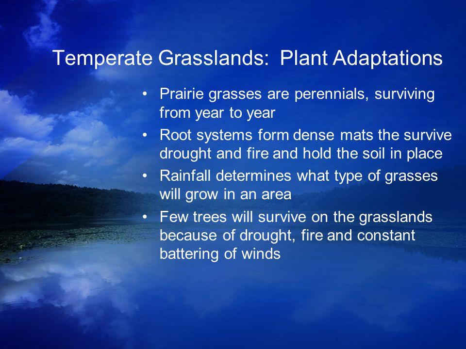 Prairie grassland animals