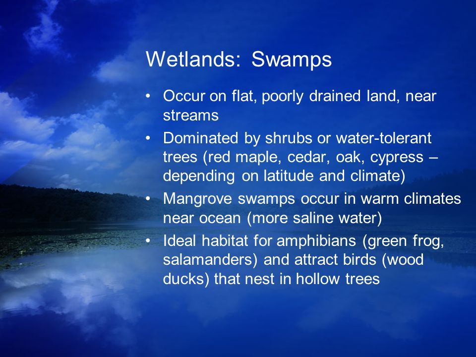 Wetlands: Swamps Occur on flat, poorly drained land, near streams Dominated by shrubs or water-tolerant trees (red maple, cedar, oak, cypress – depend
