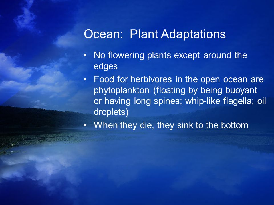 Ocean: Plant Adaptations No flowering plants except around the edges Food for herbivores in the open ocean are phytoplankton (floating by being buoyan