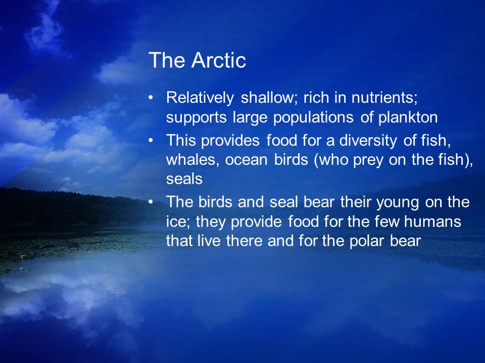The Arctic Relatively shallow; rich in nutrients; supports large populations of plankton This provides food for a diversity of fish, whales, ocean bir