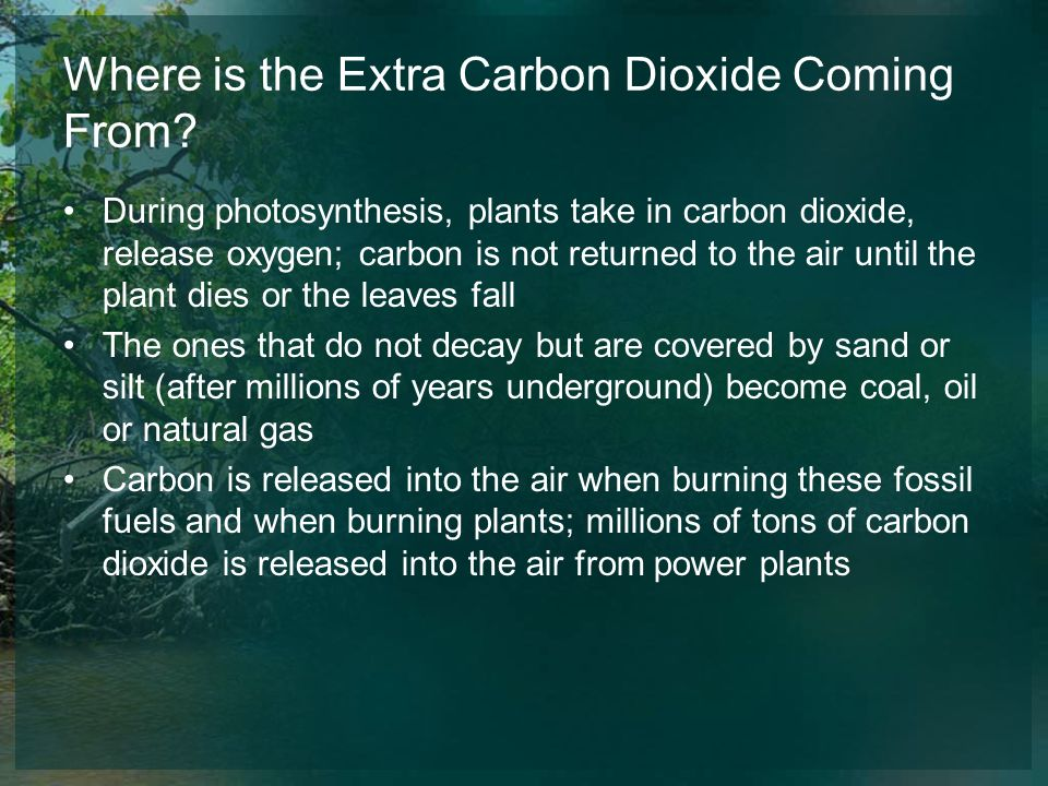 Where is the Extra Carbon Dioxide Coming From? During photosynthesis, plants take in carbon dioxide, release oxygen; carbon is not returned to the air
