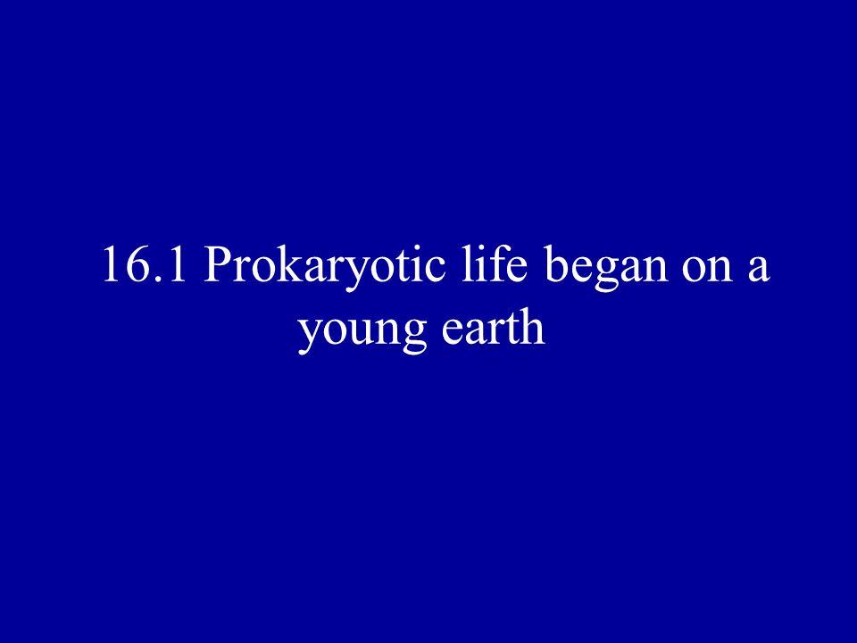 16.1 Prokaryotic life began on a young earth