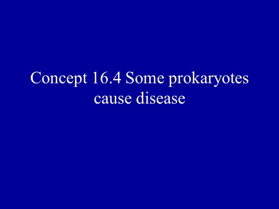 Concept 16.4 Some prokaryotes cause disease