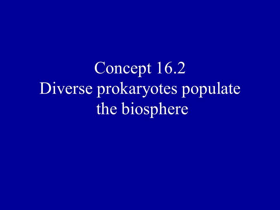 Concept 16.2 Diverse prokaryotes populate the biosphere