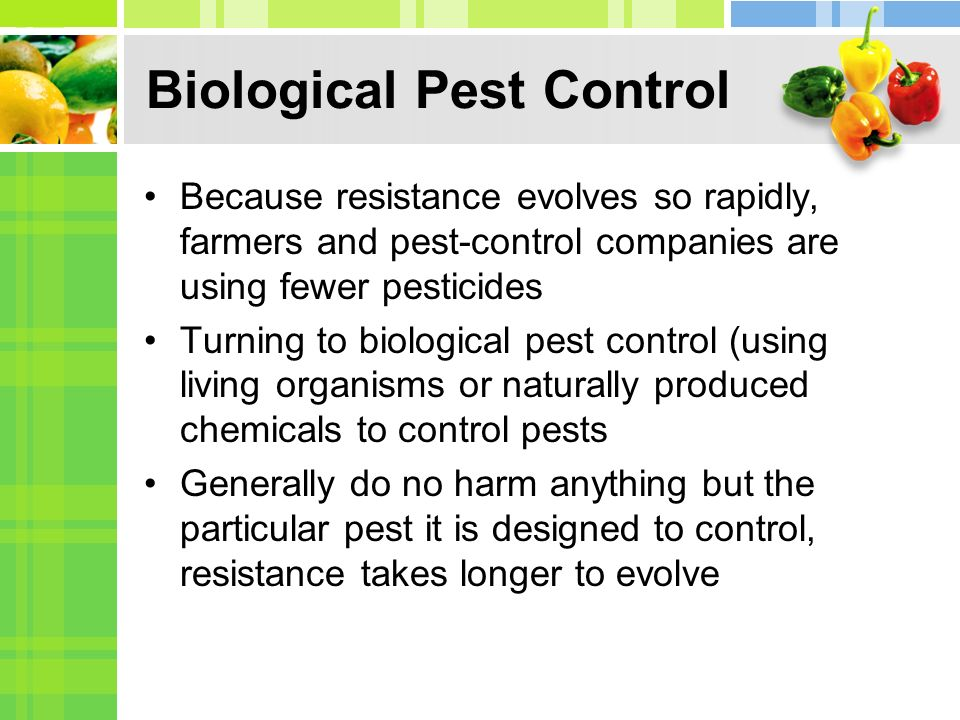 Biological Pest Control Because resistance evolves so rapidly, farmers and pest-control companies are using fewer pesticides Turning to biological pes