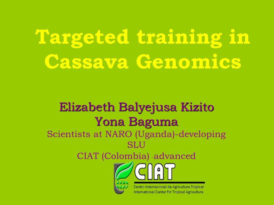 Targeted training in Cassava Genomics Elizabeth Balyejusa Kizito Yona Baguma Scientists at NARO (Uganda)-developing SLU CIAT (Colombia) - advanced