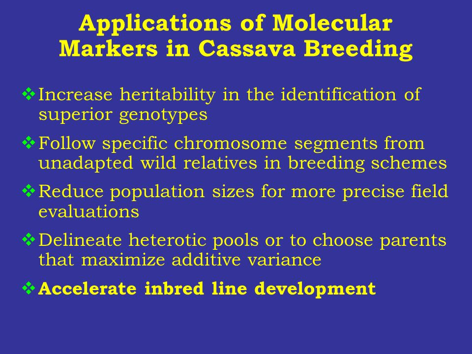 Applications of Molecular Markers in Cassava Breeding Increase heritability in the identification of superior genotypes Follow specific chromosome seg