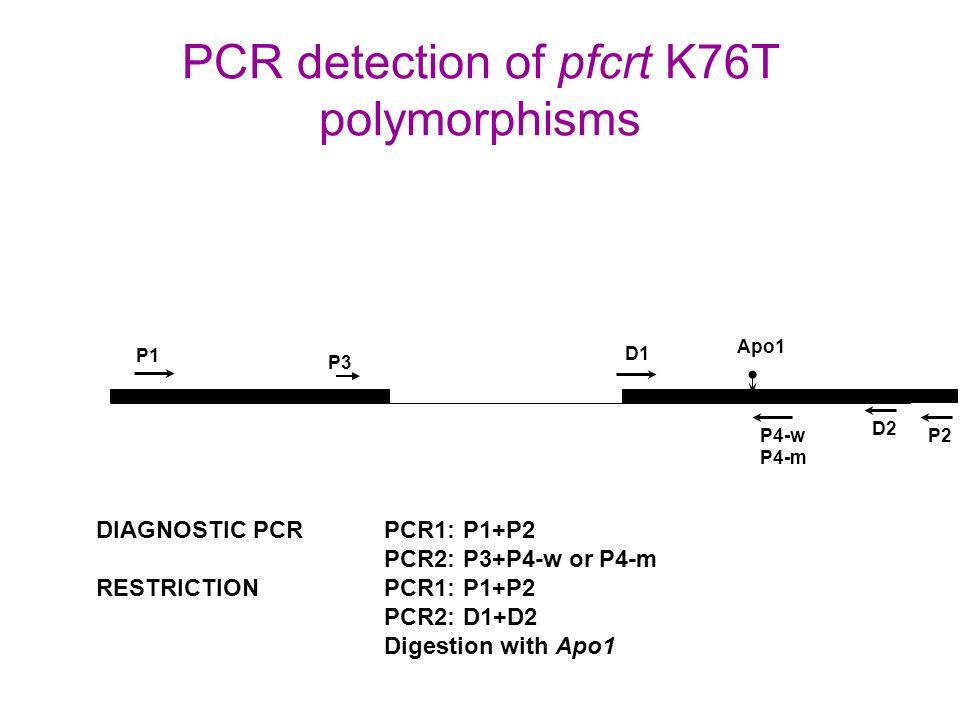 PCR detection of pfcrt K76T polymorphisms P1 P2 P3 P4-w P4-m D1 D2 Apo1 DIAGNOSTIC PCRPCR1: P1+P2 PCR2: P3+P4-w or P4-m RESTRICTIONPCR1: P1+P2 PCR2: D