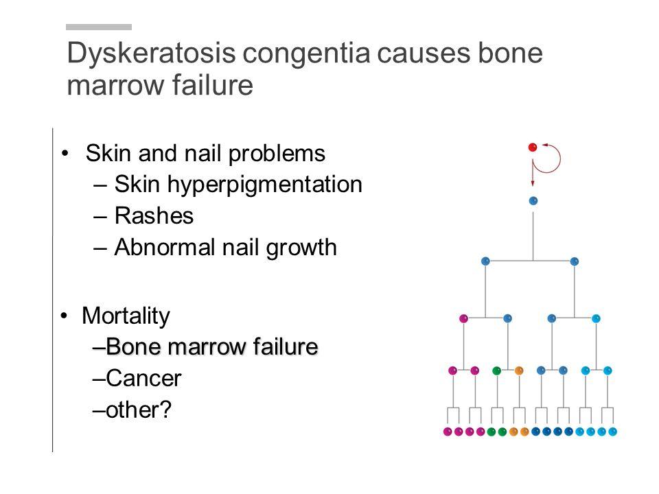 Skin and nail problems –Skin hyperpigmentation –Rashes –Abnormal nail growth Dyskeratosis congentia causes bone marrow failure Mortality –Bone marrow