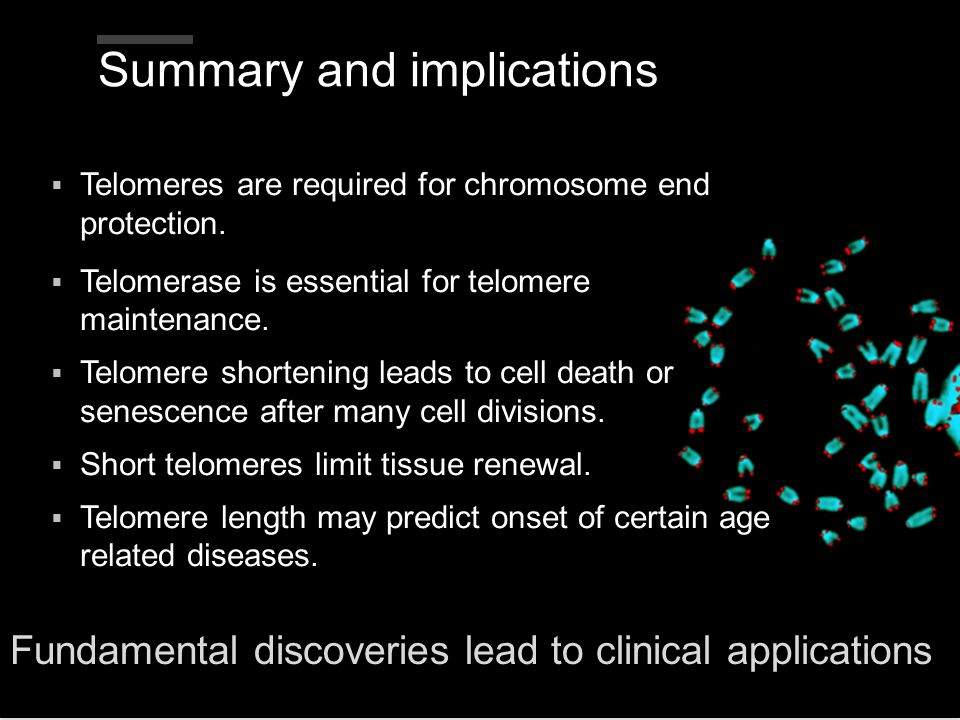 Summary and implications Telomeres are required for chromosome end protection. Telomerase is essential for telomere maintenance. Telomere shortening l