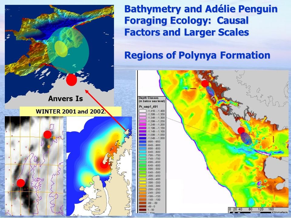 Anvers Is Bathymetry and Adélie Penguin Foraging Ecology: Causal Factors and Larger Scales Regions of Polynya Formation WINTER 2001 and 2002.