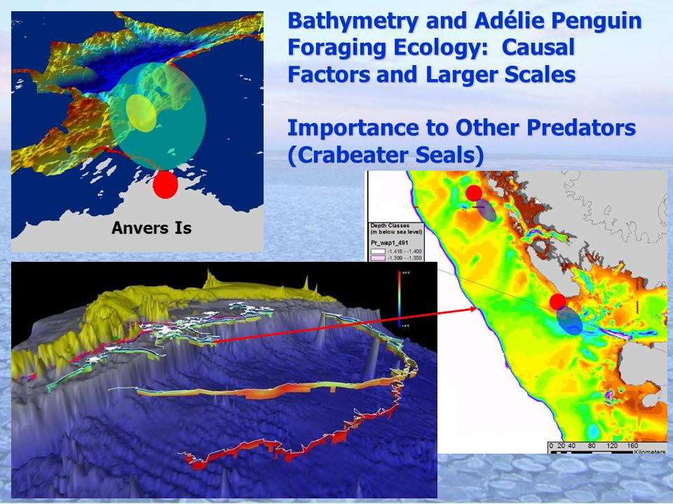 Anvers Is Bathymetry and Adélie Penguin Foraging Ecology: Causal Factors and Larger Scales Importance to Other Predators (Crabeater Seals)