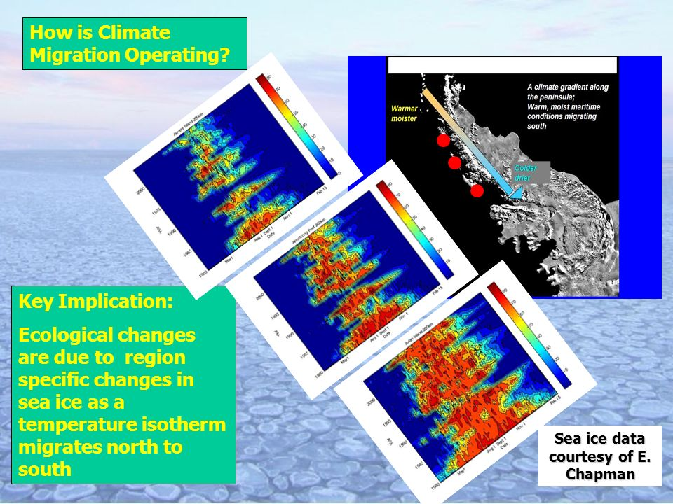 Key Implication: Ecological changes are due to region specific changes in sea ice as a temperature isotherm migrates north to south Sea ice data courtesy of E.